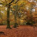 Wald und Nachhaltigkeit