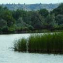 Green Week 2012